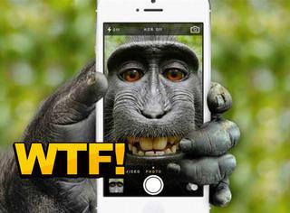 这张照片的版权属于谁?他们说是猴子的