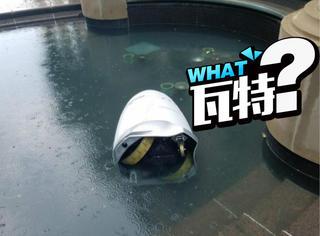 美国一机器人跳水自杀,有人说可能是因为感情问题