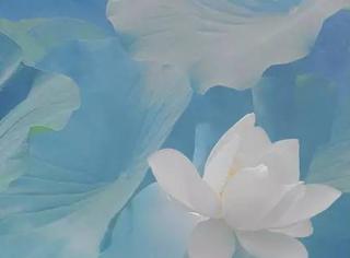 有位老人, 41年只拍一朵莲花,一生把一件事做到极致