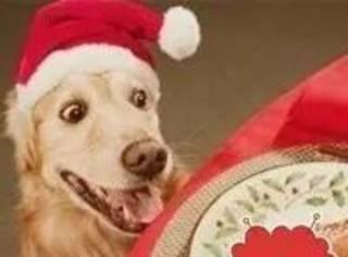 家里没吃的,居然……和狗狗抢火腿!狗狗有什么错!