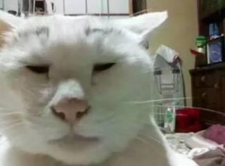 养猫的人看完会流泪,吸猫的看完会沉默……