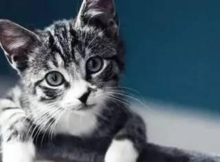 网友老妈对她养猫和养猫后的态度,最后笑喷了...