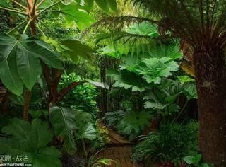 年轻时的爱上大叶植物,61岁老人花20年将自家后花园改造成秘密雨林