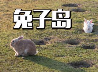 榻榻米日式风寿司拉面还有萌萌哒的小兔子!天啦撸,太萌了吧!