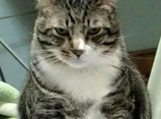 胖猫背后很痒,但它不想蹭东西来挠痒,竟然这么做