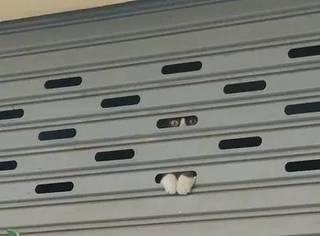 网友经过一家店铺,总感觉被一双眼睛监视了,直到他凑近一看...
