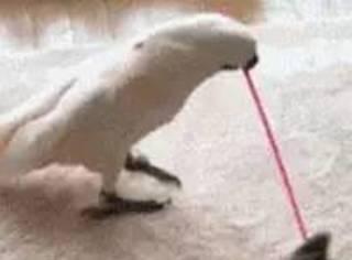 鹦鹉:再吸猫我就不是鹦鹉