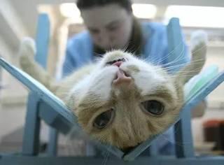 原来,给猫绝育时要这样做,它才不会恨你...