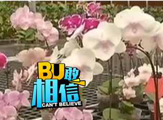 震惊!全球仅一株的价值2000万的蝴蝶兰被偷
