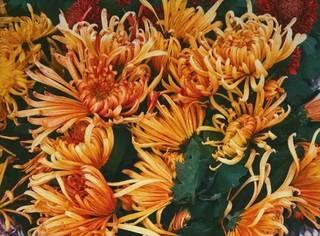 如何用手机拍花?35张经典手机花卉佳作欣赏 !