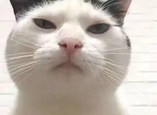 猫想要买东西,但主人不让,于是...