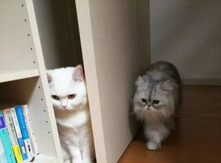 还会偷袭?这只猫大概是成精了吧
