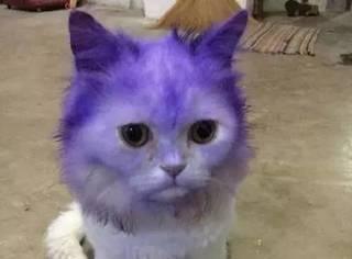 猫咪贪玩不小心沾到了染料,虽然好心疼,但是...