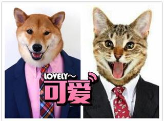 猫or犬?结果表明还是犬系男子更受欢迎