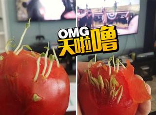 当你的水果和蔬菜开始发芽,这结果超乎想象