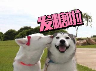 【周五话题】张若昀唐艺昕长跑七年甜蜜发糖,这一大波狗粮我吃了