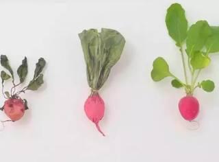 一个创意卖出13亿吨烂蔬菜,日本民众的反应出乎预料...
