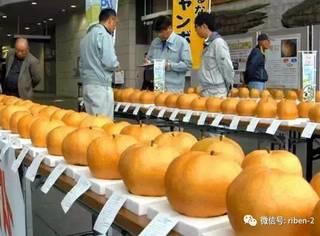 日本农业到底有多发达?