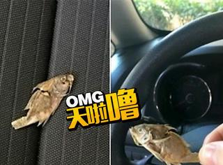 她在车里发现了一条风干的小鱼,于是在facebook上火了