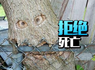 地震来了,但我们要做一棵拒绝死亡的树