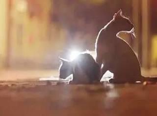 上海男人每晚喂养300只流浪猫,坚持8年风雨无阻...