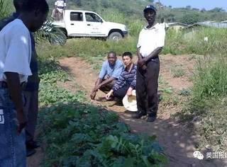 中国人去非洲也能轻松种出一片菜地:这是种族天赋啊!