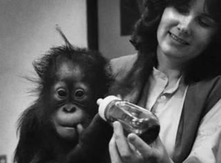 世界上唯一的大学毕业猩猩,却在牢里待了30年,最终抑郁而亡...