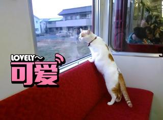 日本推出全世界第一列猫火车,满满一车的萌