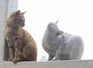 橘猫看到漂亮白猫,没忍住亲了一口,结果...