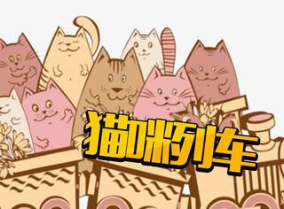 猫咪也能做站长?!最可爱的猫咪列车来了!别拦我我要吸猫!