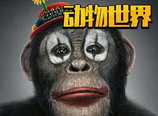 传李易峰参演的《动物世界》正式杀青,这可能是最期待的华语片