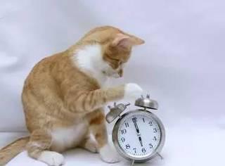 上班上学起床难?养只猫啊!