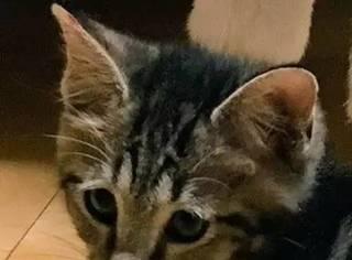 网友给家里的猫买了个小床,结果被家里的二哈看到之后...