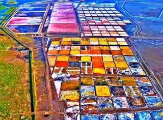 黄土朝天的陕北小县城竟然一次性长出55万亩花海!