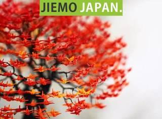 日本90后帅哥,用1厘米纸折出10000只千纸鹤,温暖了10万人的心。