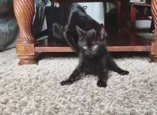 小黑猫患病,痛苦度日,直到有天来了一只小猪后...