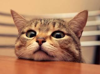 推主带猫出门散步,猫这小碎步走的好撩骚,老羡慕了...