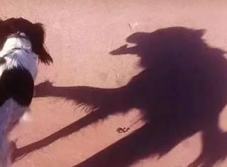 影子真是个神奇的东西,你看到的未必是真相!