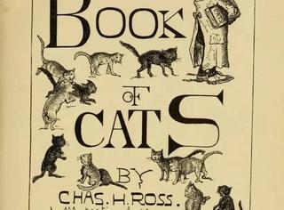 读了300多本著作,就为了完成一部猫百科