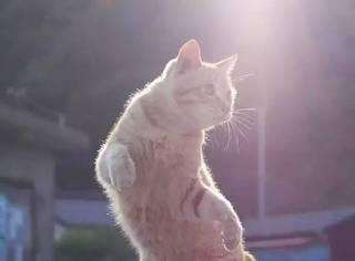 摄影师在街头拍到一只会武功的橘猫,太厉害了