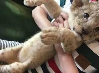 有幸能摸到小大猫是一种什么样的体验?