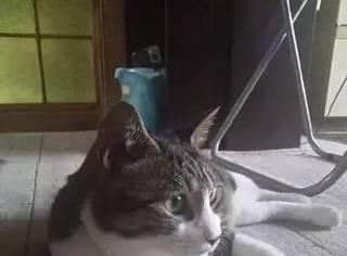 主人忘记喂猫粮就上班去了,回家后猫生气了,竟摆了这姿势...
