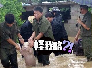 猪的迷之微笑也会让人上瘾
