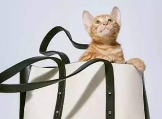 朕这么fashion又可爱,你真的不把我领回家吗?