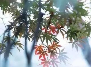 9月,清秋最美的景色都在这里了