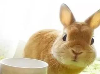 在外卖萌赚钱,回家努力看娃…这兔几,萌得hin有担当哇!