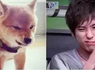 日本可爱犬系男星排名TOP10,柴二宫竟然才排第二?