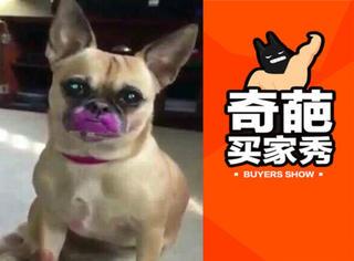 狗狗用表情告诉你:他不愿意