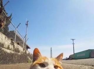遇到我的猫之前,我是不相信缘分的…