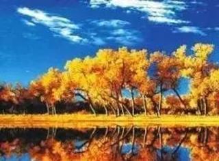 只有胡杨才懂秋天,美哭了